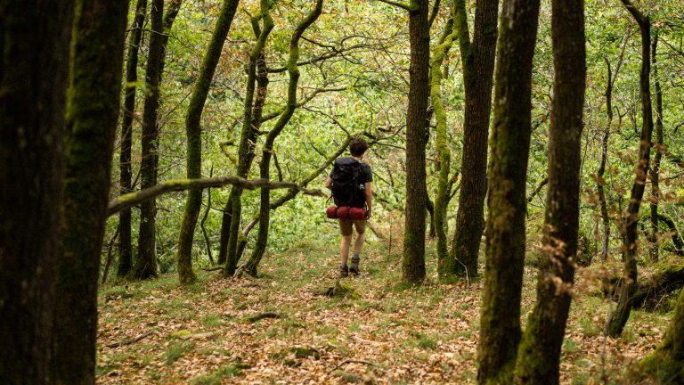 Wandelen in het bos langs de Ourthe