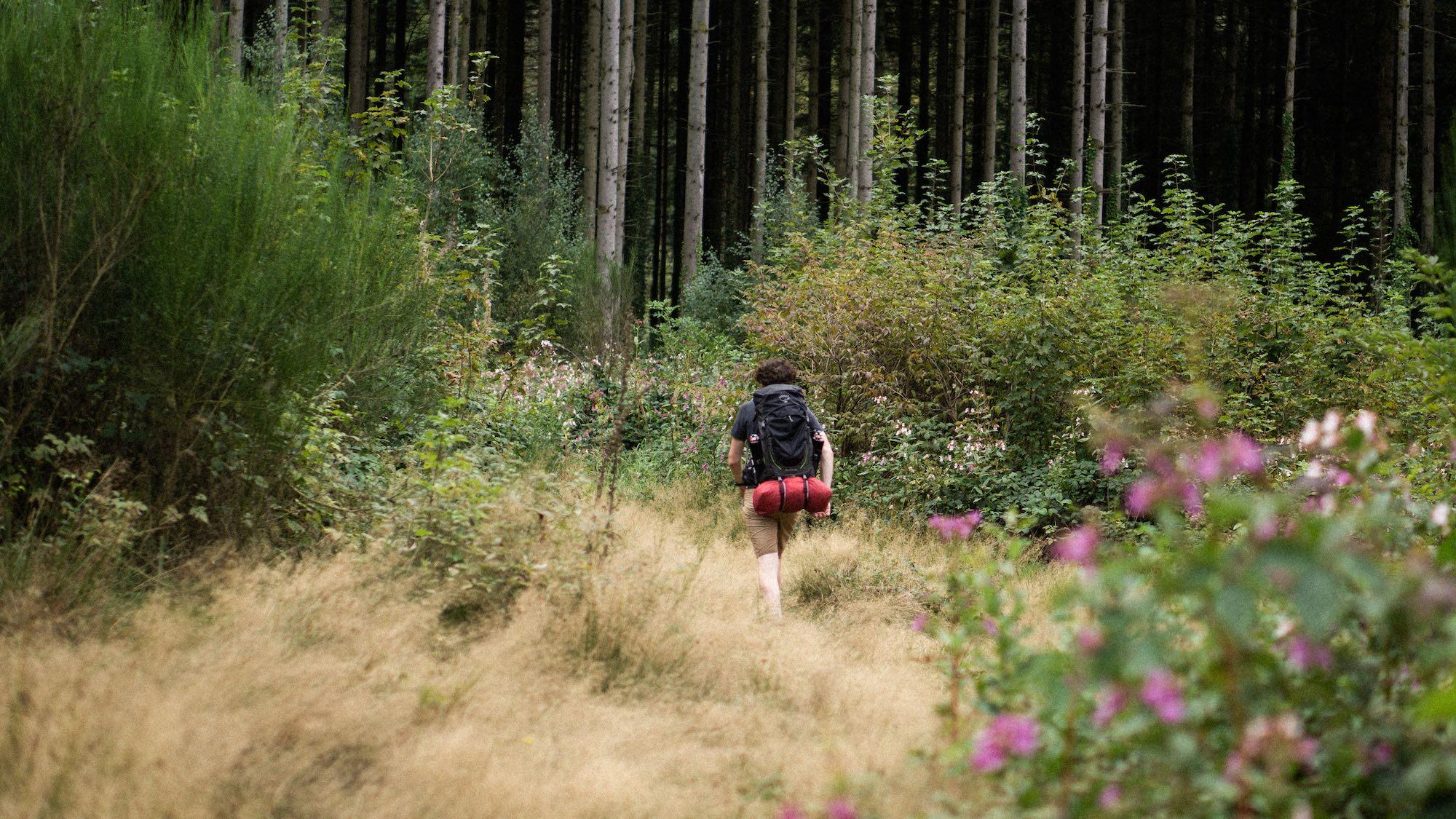 Wandelen door de Ardense bossen