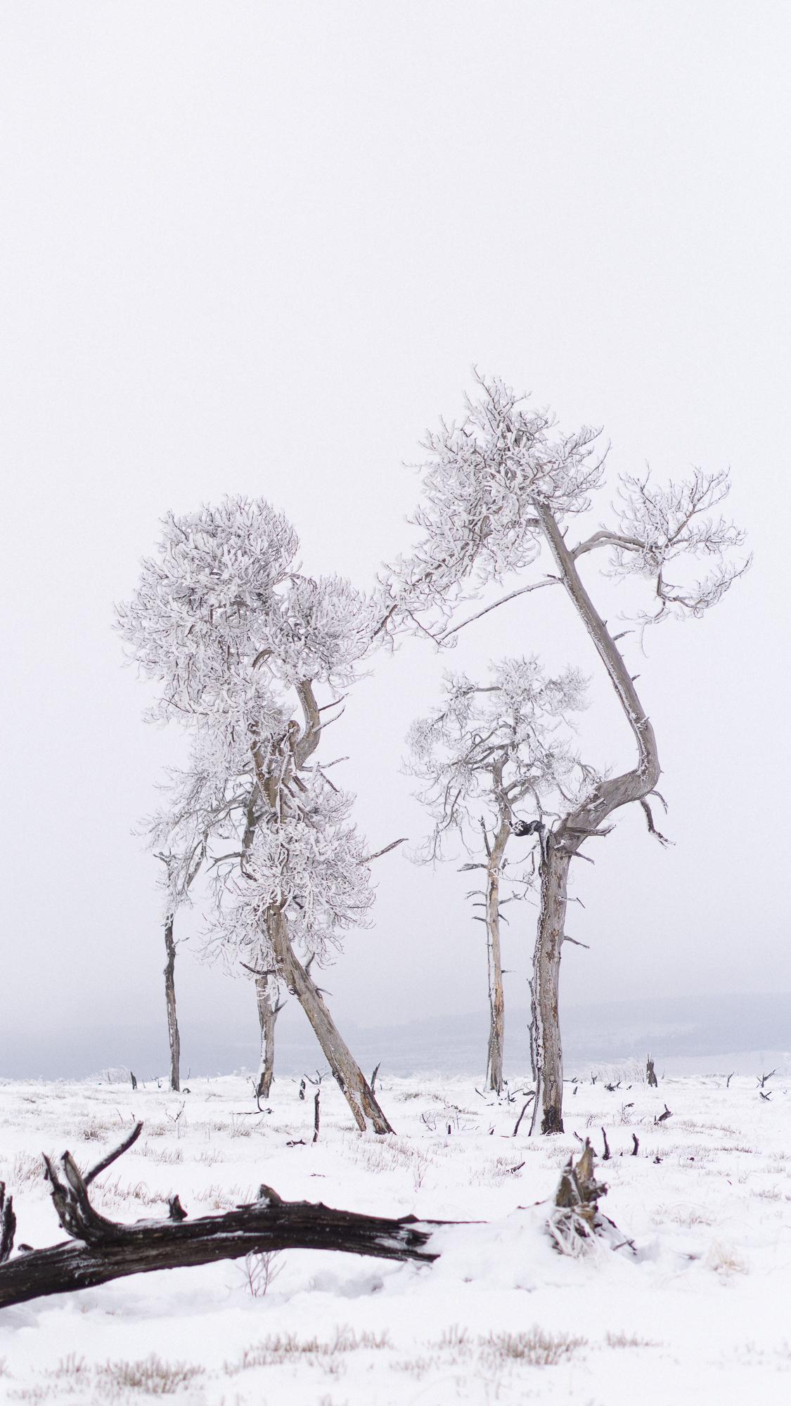 Alleenstaande bomen in besneeuwd landschap