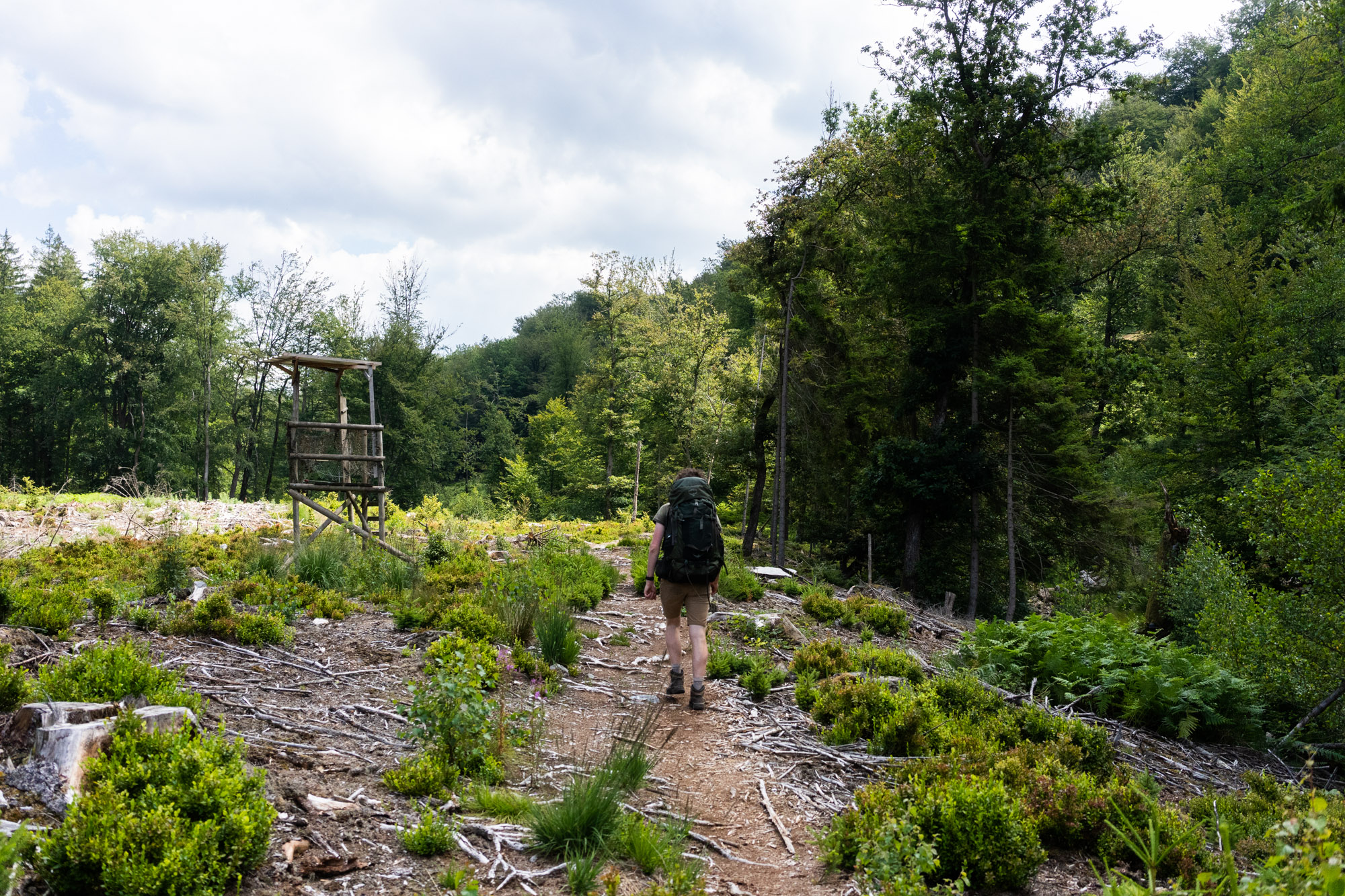 Wandelaar op wild pad